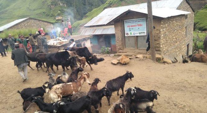 पशु स्वास्थ्य शिबिरवाट २१४ कृषक लाभान्वित